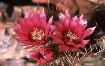 35 Cactus Flowers